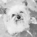 Documenting the Loss of a Pet with Project Life®