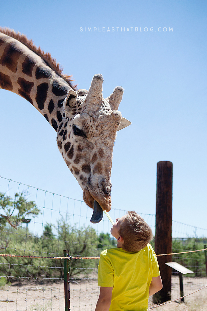 Take a walk on the wild side and get up close and personal with giraffes, tigers and more at Out of Africa Wildlife Park!