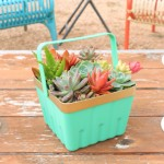 Simple Succulent Berry Basket Planter