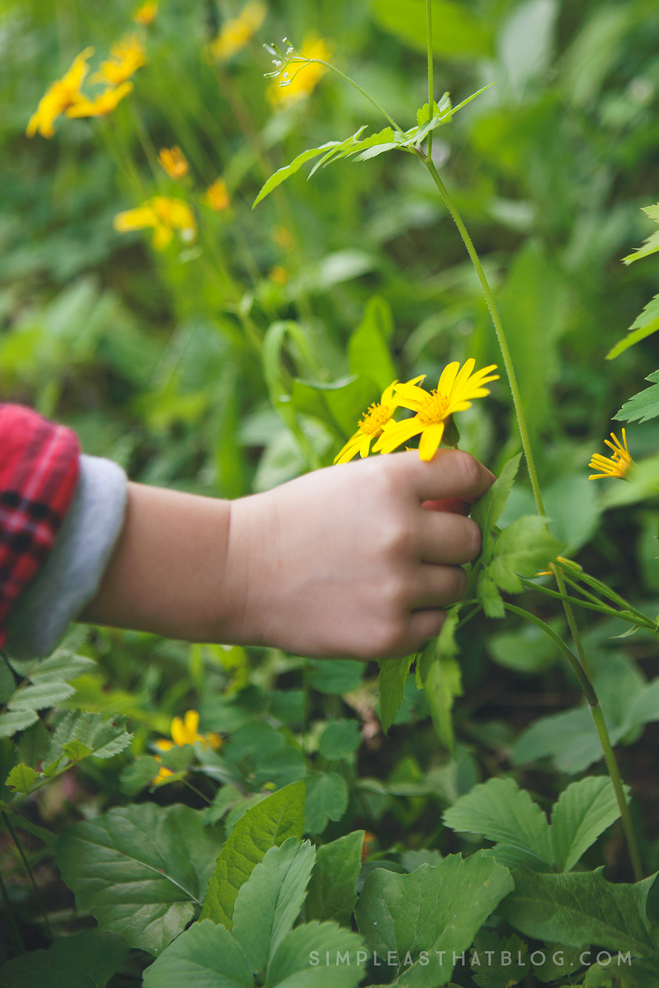 For families who would like to leap from observing to exploring, here are 6 tips to help kids EXPLORE nature with all of their senses.