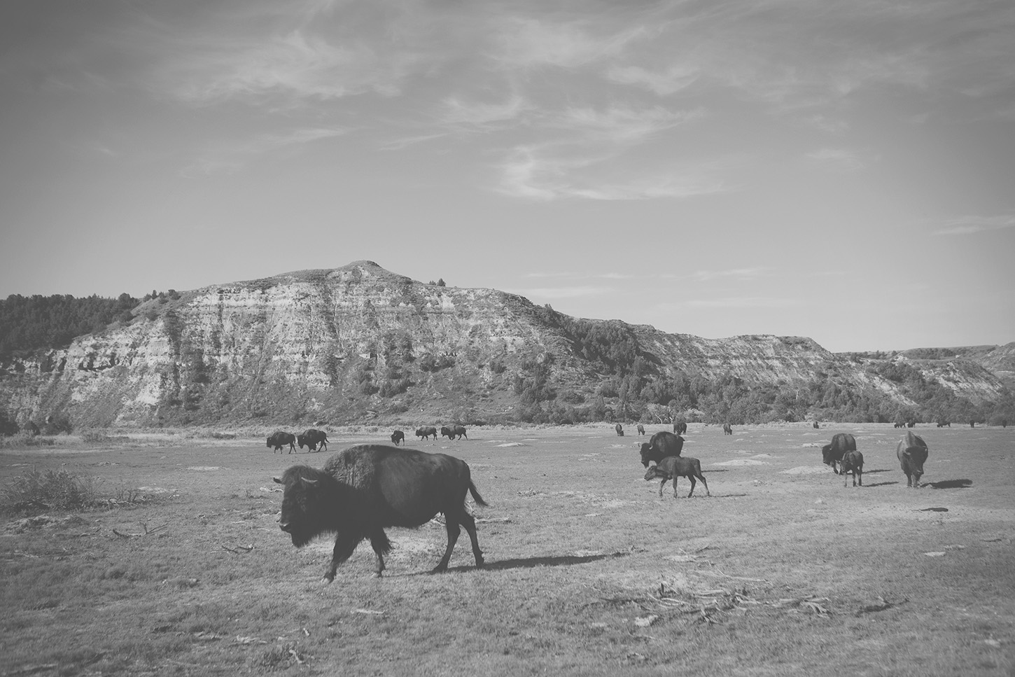 What I learned about fighting for margin in our family's life—while wandering the prairies of Theodore Roosevelt National Park.