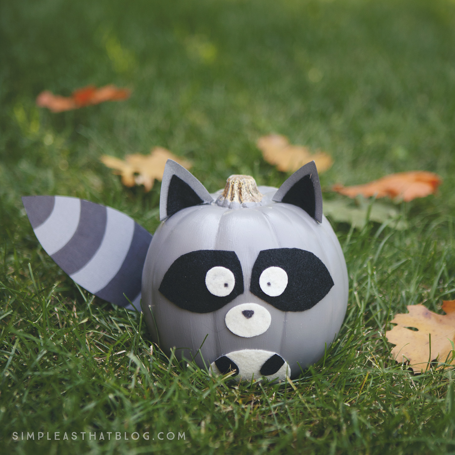 Adorable no-carve raccoon pumpkin.